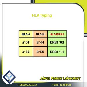 Detection of 96 HLA-A, HLA-B and HLA-DR
