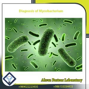 diagnosis of mycobacterium